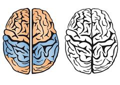 brain intelligence - stock illustration
