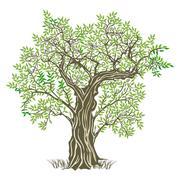 Old olive tree  Stock Illustration