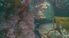 Fish rockey reef Stock Footage
