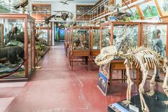 Interior Of Zoological Museum Of Cluj Stock Photos