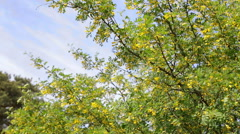 Yellow flowers and blue sky Stock Footage