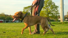 Walking dog in the park Stock Footage