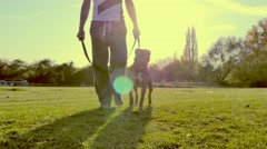 Walking dog in the park 4K Stock Footage