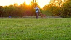 Dog playing in the park Stock Footage