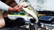 Stock Video Footage of Bass 5lb hold on boat