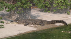 Crocodile at Crocodile Farm in Samut Prakan Province, Thailand Stock Footage