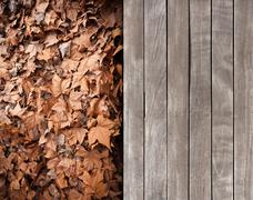 Deck and dead leaves Stock Photos