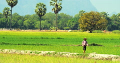 Burmese villager walks along rice field edge. Beautiful landscape Stock Footage