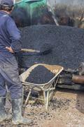 Asphalt workers with a shovel filling wheelbarrow with asphalt Stock Photos
