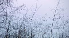 Geese flying over lake National Park de Groote Peel Stock Footage