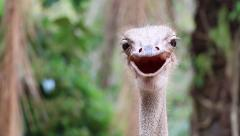 Ostrich Head In Zoo Stock Footage