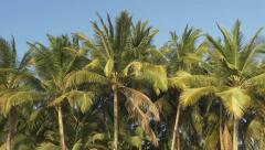 Palm trees. - stock footage