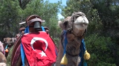 Camel with a Turkish flag on its hump Stock Footage