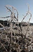 Stock Photo of icy twigs and grass in snow against blue river and sky