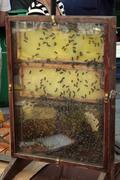 bee hive in honey stall at a farmers market - stock photo