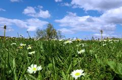 grass and daisies in county Kerry Ireland - stock photo