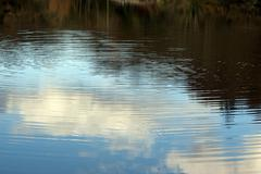 Ripples on a quiet irish river with reflections Stock Photos