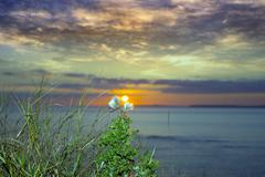 yellow sunset over loop head with thistles - stock photo