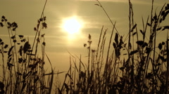 Morning Sun Over Spring Grasses Stock Footage