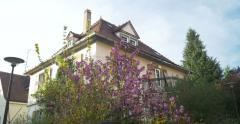 Sakura in front of house Stock Footage