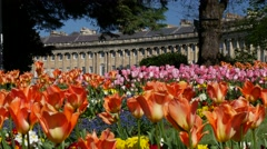 Royal Crescent, Bath, UK with beautiful tulips in foreground, 4k, UHD Stock Footage