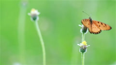 Bring of butterfly in the summer. Stock Footage