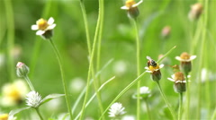Bring of honey bee in the summer. Stock Footage