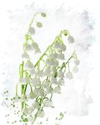 Stock Illustration of Lily Of The Valley Watercolor