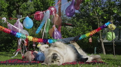 Dog and boy party. Stock Footage