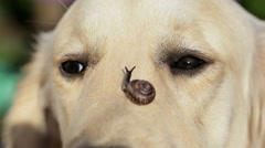 Dog and a snail. Stock Footage