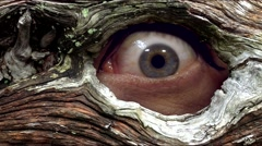 Eye spy - Watching out of the hollow tree Stock Footage