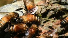 Bees on the ground. Stock Footage