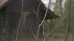 Old shack in forest - stock footage