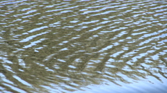 Water Ripples Background - stock footage