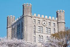 Castle tower over blooming cherry trees Stock Photos