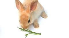 Small rabbit on a white background Stock Footage