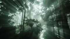 Light rays shine through a dark forest - stock footage