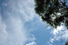 expanse of clouds in blue sky with a tree branch on the corner - stock photo