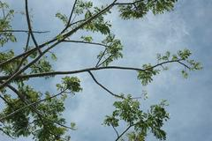 low viewpoint of branches - stock photo