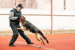 German shepherd dog training in Gomel Regional sports club and d - stock photo