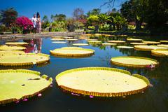 Pond with lily, botanical park in Indonesia Stock Photos