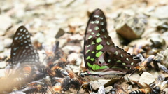 Butterfly and bees on the ground Stock Footage