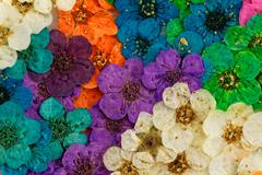 Decorative montage compilation of colorful dried spring flowers (purple, gree - stock photo