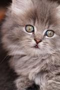 A beautiful green eyed kitten looks up at the camera - stock photo
