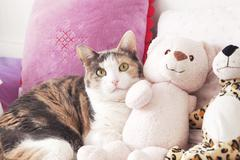 Cat and the peluche Stock Photos