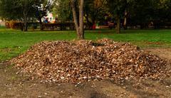 Pile fallen autumn leaves in the park Stock Photos