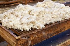 Fresh sheared wool Stock Photos