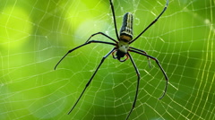 Spider on the web macro - stock footage