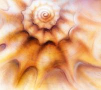 Abstract painting sea shell, mixed media art background  Stock Illustration