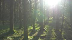 Running through the mossy forest pass the tree trunks - stock footage
